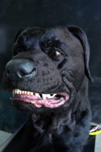 Animatronic Dog for the film 'Stag Night'