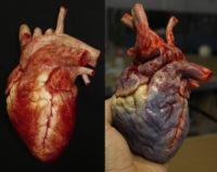 Animatronic Pumping Hearts