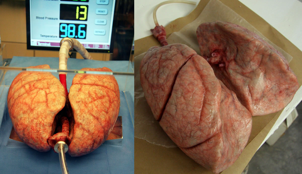 Animatronic lungs for the series 'House M.D'