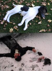 Dead dog for the fim 'A Single Man'