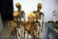 Skeletons created for the series 'Rizzoli and Isles'